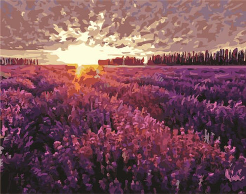 Landscape DIY Paint By Numbers Kits Lavender Field in Twilight DIY Paint By Numbers