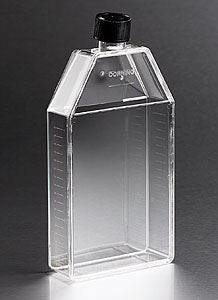 430824 150cm Rectangular Canted Neck Cell Culture Flask w
