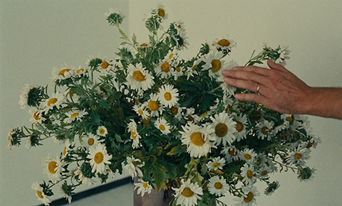 daisies as pictured in Le Bonheur