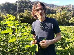 man with long hair wearing t shirt in field of tea leaves