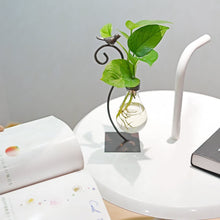 Load image into Gallery viewer, Desktop Money Plant Planter Hydroponics