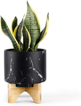 Load image into Gallery viewer, Luxury Snake Plants Indoor