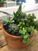 Wooden succulents bowl
