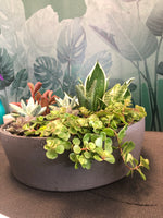 Large sun filled succulent bowl dark granite gray