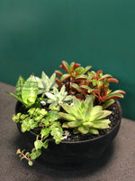 Succulent mix large black bowl