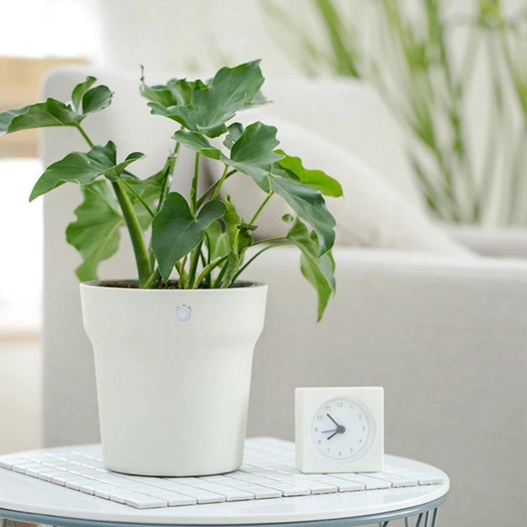 smart pot for plants