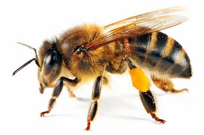 The Mystery of the Missing Bees