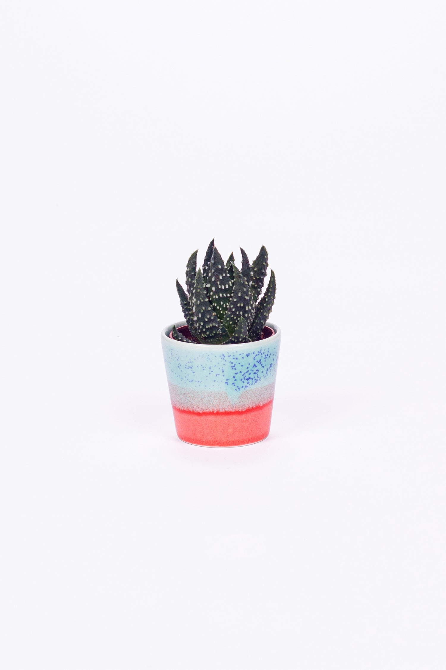 SGW LAB PLANT POT - CORAL REEF