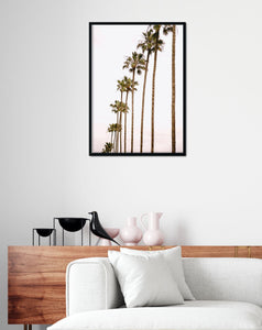 San diego palm tree print