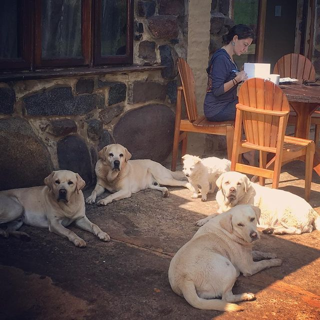 Lodge dogs in South Africa