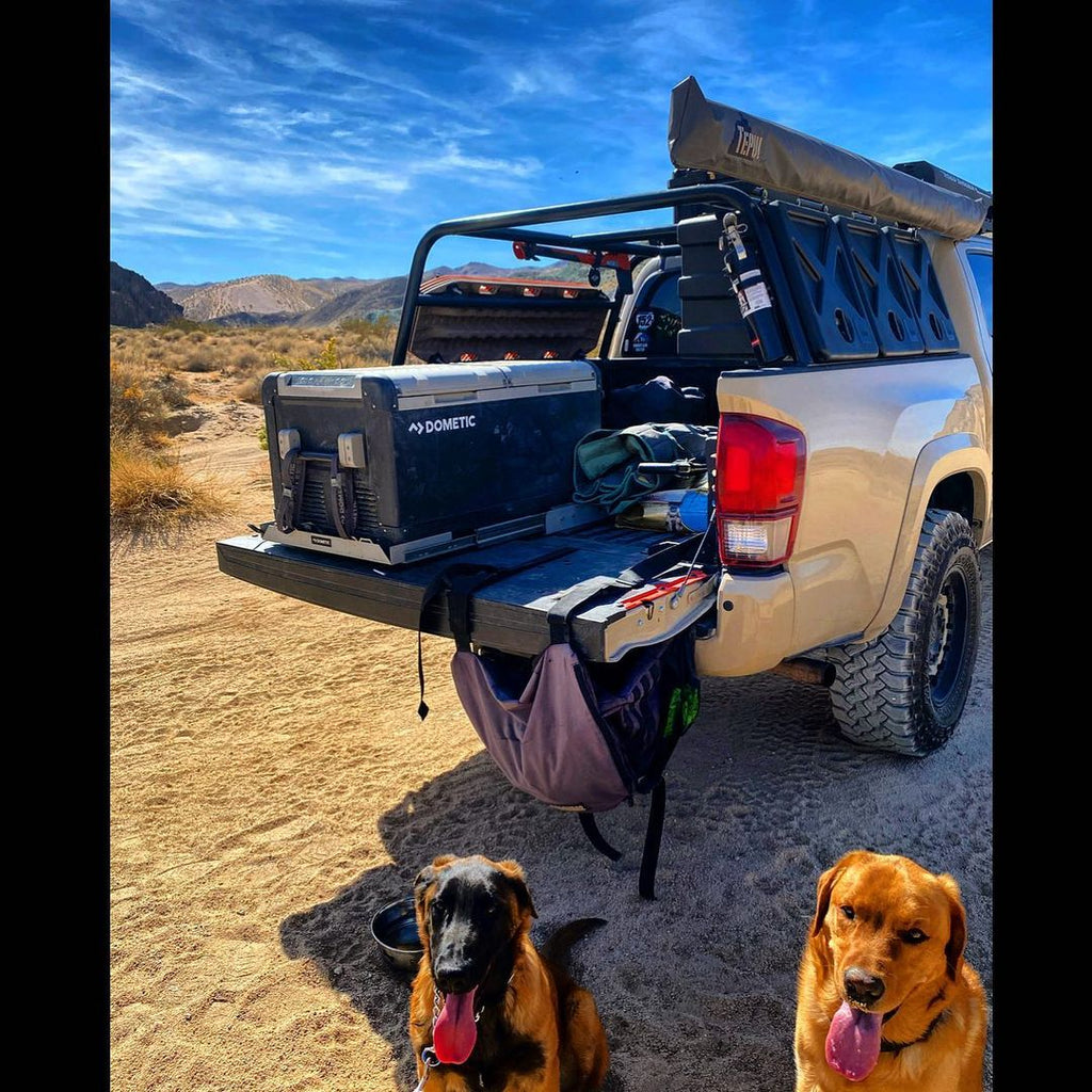Toyota pickup and dogs