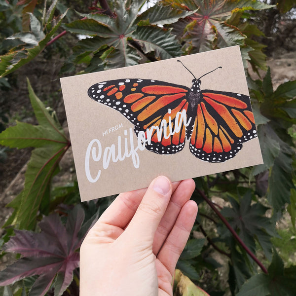 California Monarch Butterfly