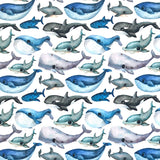 Whales Cotton Jersey Fabric-Adam Ross Fabrics