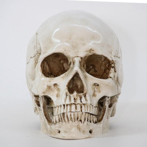 Skull Replica - All Hallow Evening