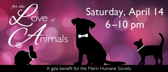 Stylish Success at the Humane Society Fundraiser!