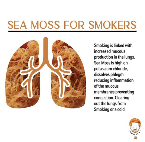 Benefits of Sea Moss Gel for Smokers