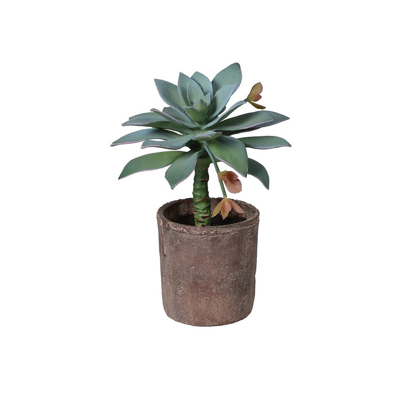 Potted Succulent in Terracotta Pot