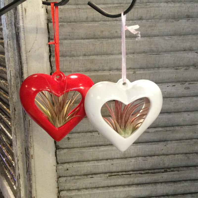 Hanging Heart Air Plant