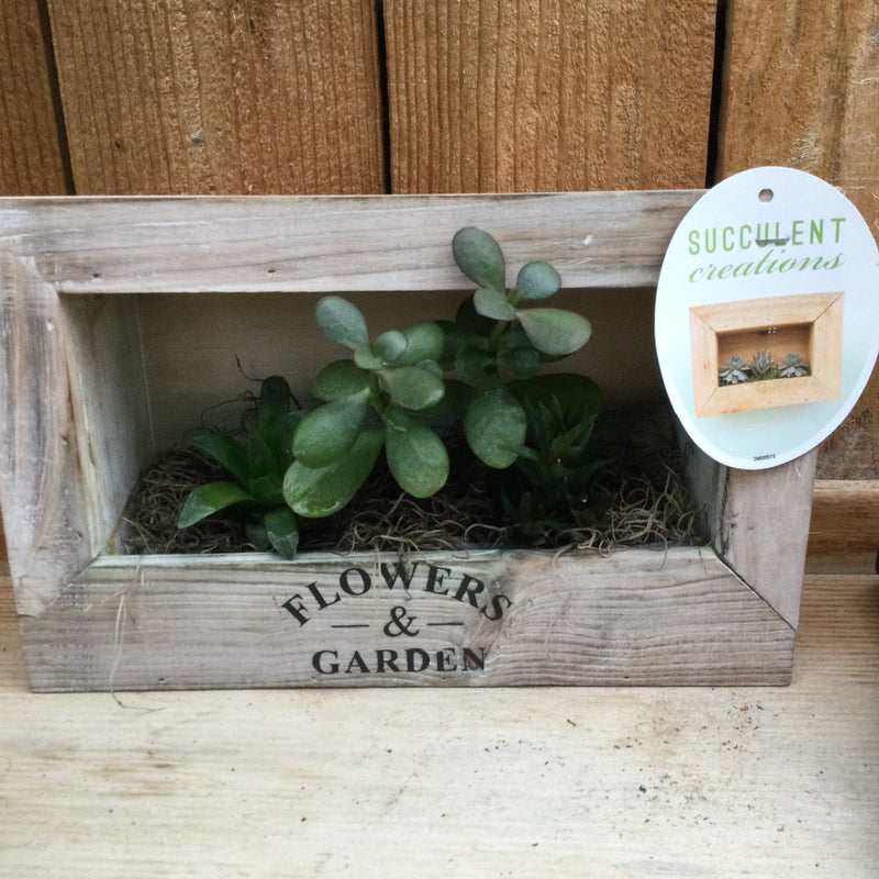 Shadow Box Succulent