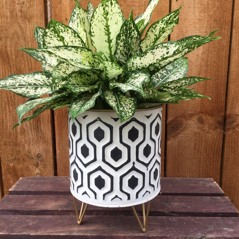 Small Hexagon Round Planter
