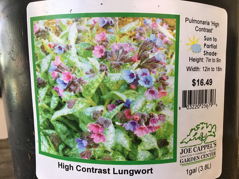 Pulmonary 'High Contrast' Lungwort