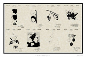 Luther Burbank Botanist Patents, 20x30