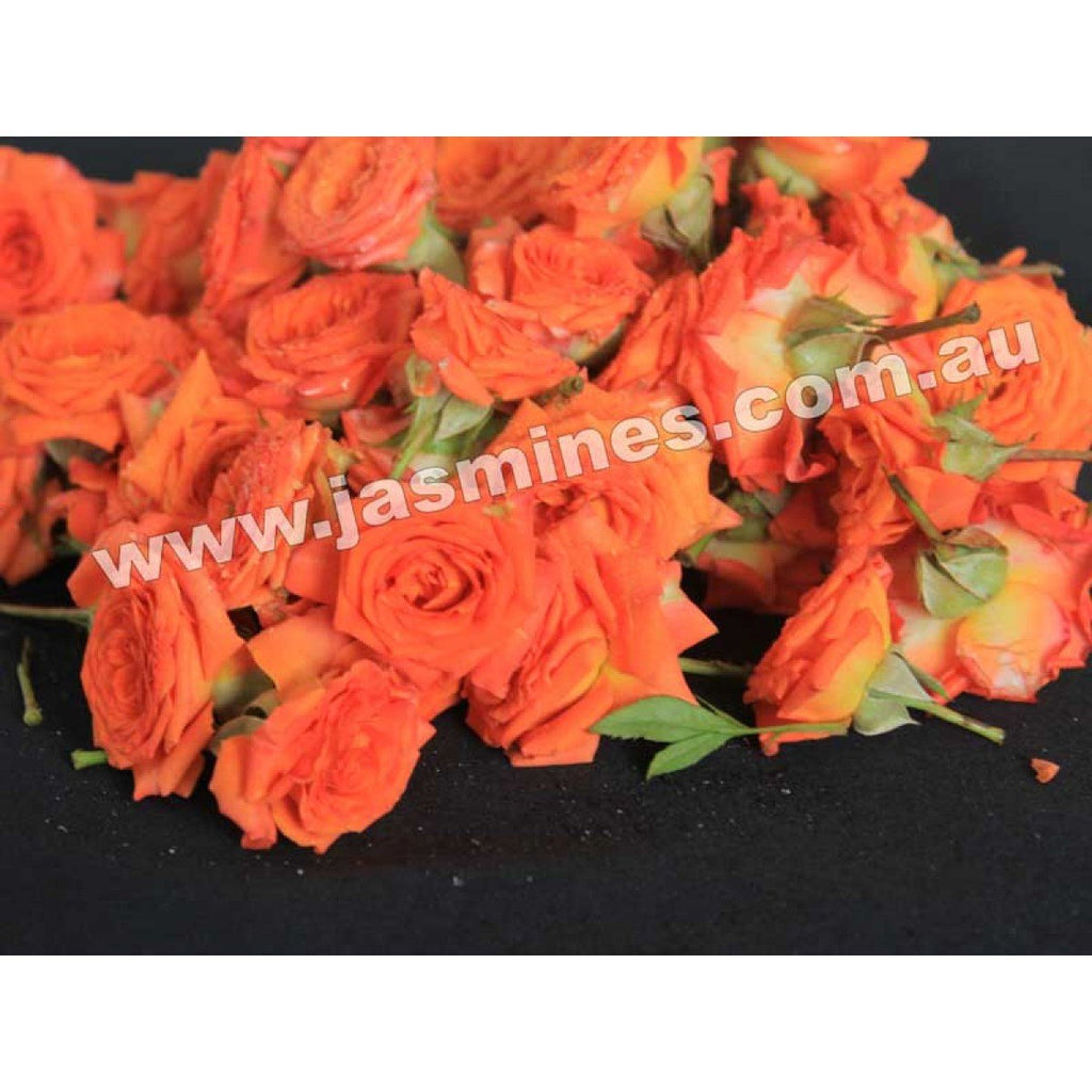 Button Rose Orange