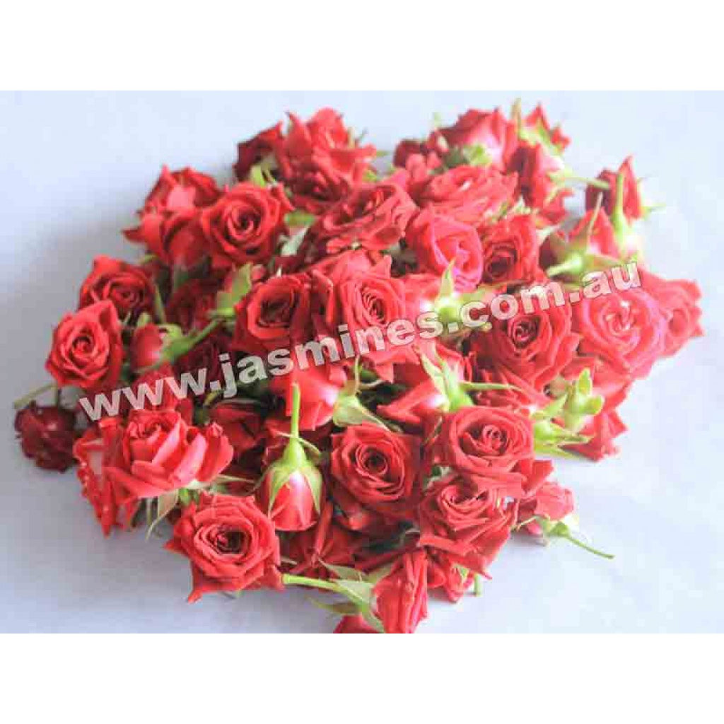 Button Rose Red