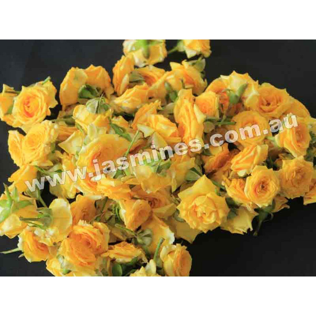 Button Rose Yellow