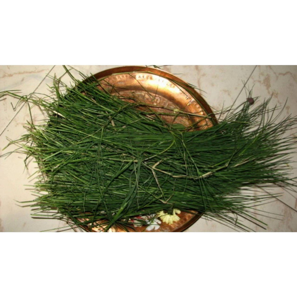 Arugampull(Dhub grass) Bunch - Ideal for Ganesh Chaturthi/Vinayaka Chaturthi