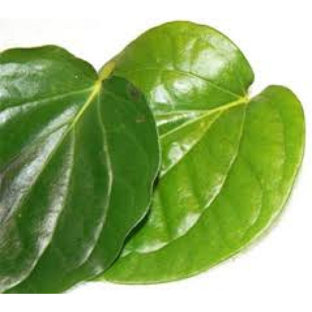 Kolkata paan leaves ( Big Betel Leaves )