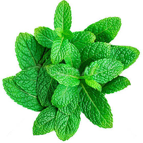 Organic Mint leaves (Pudina), 1 Bunch (100-120 g)