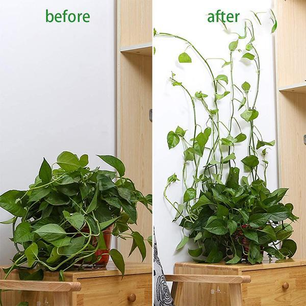 (upgrade)Plant Climbing Wall Fixture
