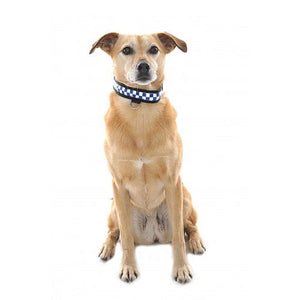 Equisafety - HI -VIS Reflective flashing LED Dog collar