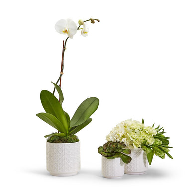 White Webbing Planters, Ceramic USA Made Planters Indoor