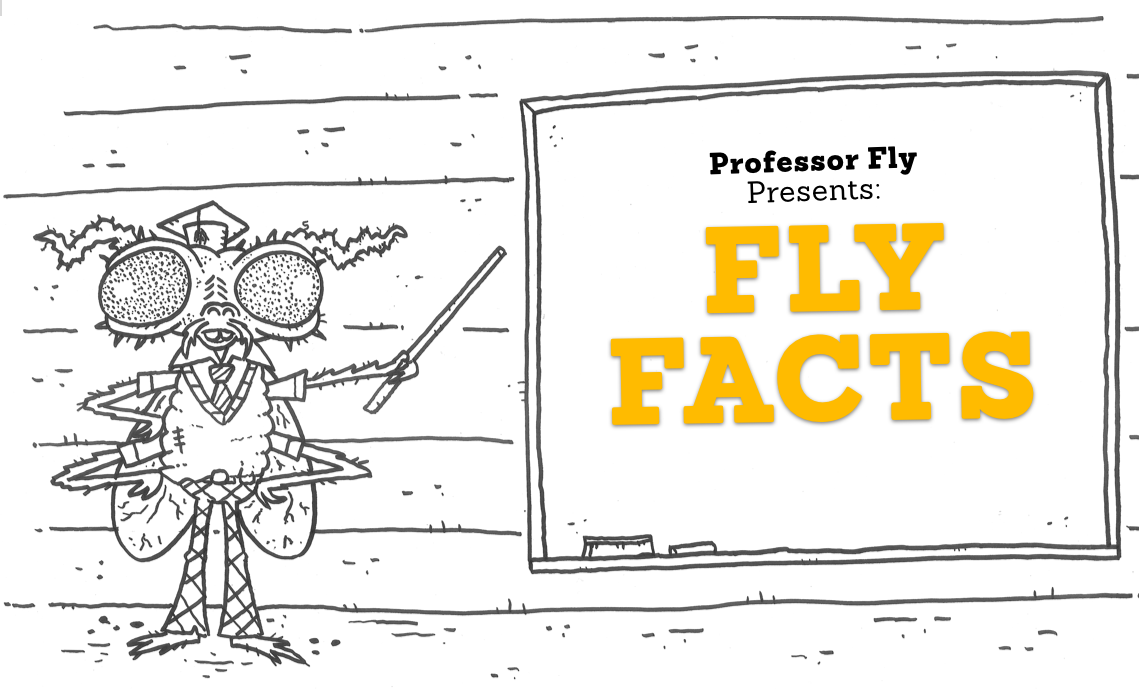 Professor Fly Presents: Fly Facts