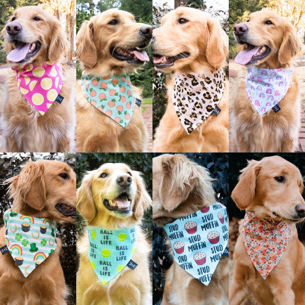 Stud Muffin Dog Bandana - shoptheexchange