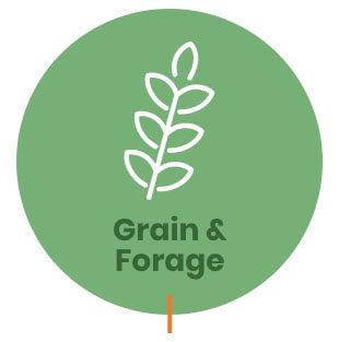 Grain & Forage Acid Preservation