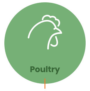 Organic acids & Toxin Binders for Poultry Production