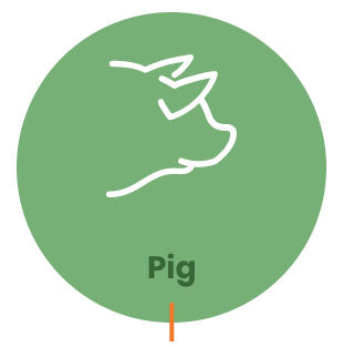 Pig Drinking Water Acid, Organic Acids, Piglet Feed