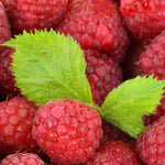 Raspberry Leaf Cut & Sifted