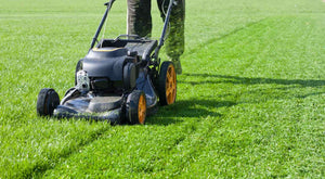 Mowing the lawn in summer