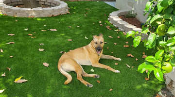 Which Artificial Turf is the Best Option for Your Dogs