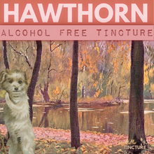 Load image into Gallery viewer, Hawthorn (May Blossom) Herbal Tincture (alcohol free)