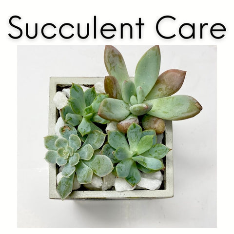 Care Guide for Succulents