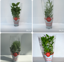 Load image into Gallery viewer, Organic Potted Herbs 6pc - Italian Basil