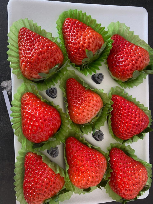 Dongbei Sweet strawberry 9-11pc