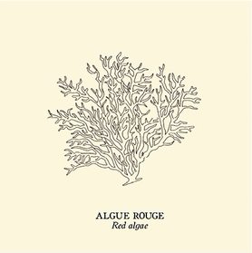 Algue rouge