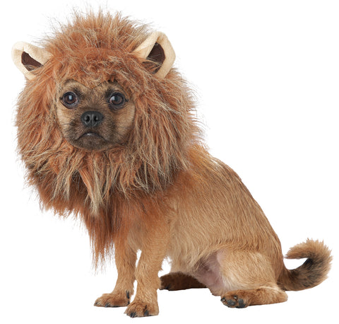 King Of Jungle Dog Costume