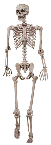 "62"" Skeleton Poseable"